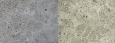 Forest Floor Alder and Birch
